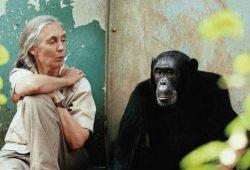 Wonderful Indonesian Primates-online2